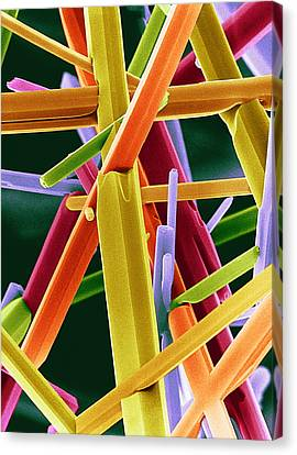 Caffeine Crystals, Sem Canvas Print by Dr Jeremy Burgess