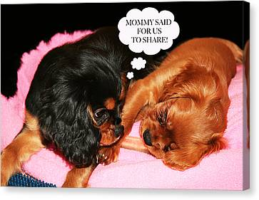 Cavalier King Charles Spaniel Let's Share Canvas Print by Daphne Sampson