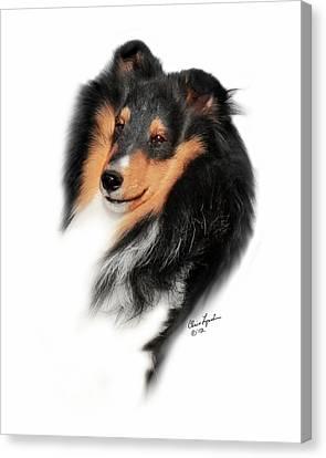 Shetland Sheepdog Canvas Print - Chosen Kismet Surprise 644 by Chris Lynch