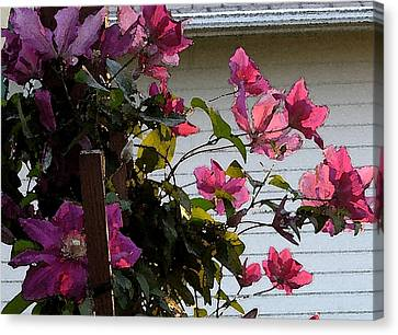 Canvas Print featuring the painting Clematis by Susan Fisher