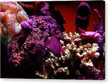 Bruster Canvas Print - Colors Of Underwater Life by Clayton Bruster
