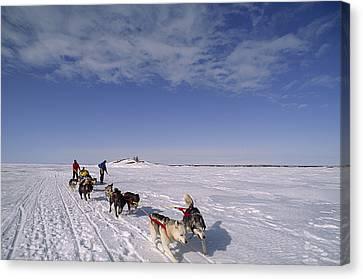Dog Sled Crosses Frozen Lake Canvas Print by Gordon Wiltsie