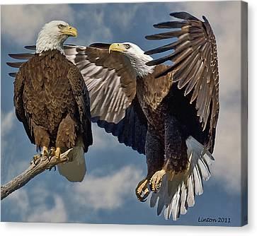 Eagle Pair 3 Canvas Print by Larry Linton