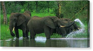 Elephant Shower Canvas Print