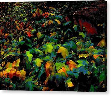 Fall Thimbleberry Canvas Print by Anne Havard