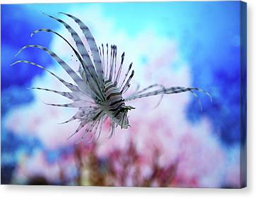 Fish In Aquarium Canvas Print by Love design, Love City, Love Life
