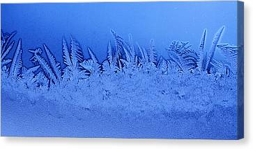 Frost Forest Canvas Print by Thomas R Fletcher