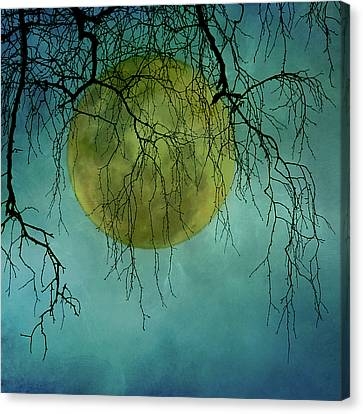 Full Moon Canvas Print by Jill Ferry