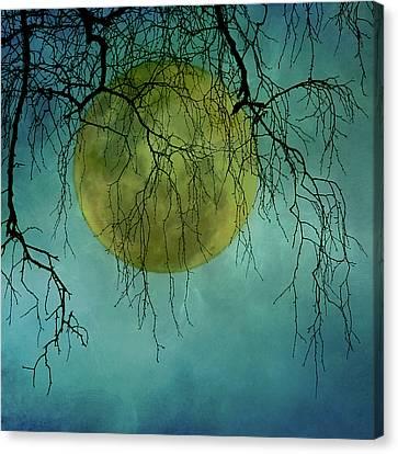 Full Moon Canvas Print by Jill Ferry