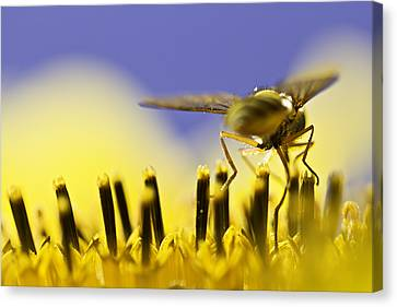 Bees Canvas Print - Gathering by Danielle Silveira