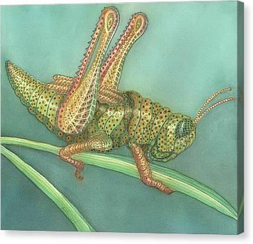 Grasshopper Canvas Print by Anne Havard