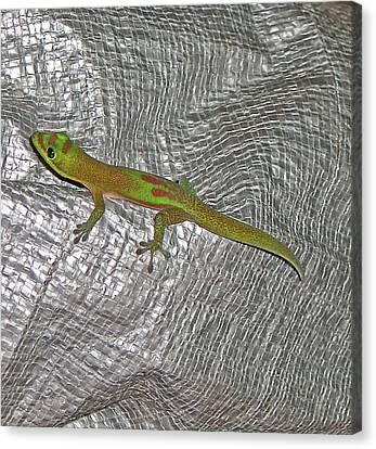 Hawaian Gecco Canvas Print