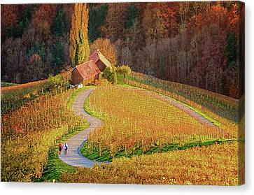Heart Shaped Wine Road In Slovenia In Autumn, Herzerl Strasse Canvas Print