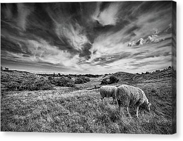 Heather Hills I Canvas Print by Stefan Nielsen