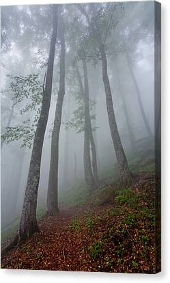 High Forest Canvas Print by Evgeni Dinev