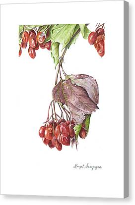 Canvas Print featuring the painting Highbush Cranberry  by Margit Sampogna