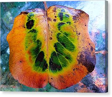 Hippie Leaf Canvas Print