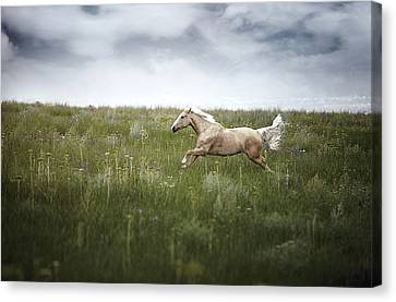 Horsepower Canvas Print by Arman Zhenikeyev - professional photographer from Kazakhstan