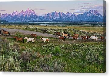 Teton Canvas Print - Horses Walk by Jeff R Clow