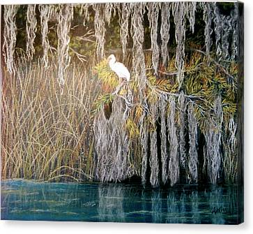 Canvas Print featuring the pastel Ibis At Wakulla Springs by Jan Amiss