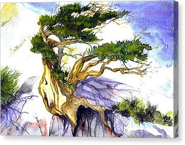 Juniper Blow Canvas Print by Pat Crowther
