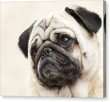 L-o-l-a Lola The Pug Canvas Print by Kathy Clark