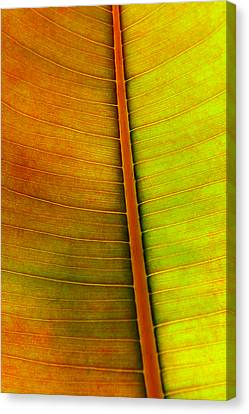Fiber Canvas Print - Leaf Pattern by Carlos Caetano