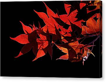 Leaves Of Red Canvas Print by Heather Applegate