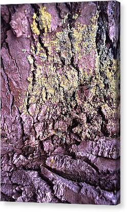 Lichen On Tree Bark Canvas Print by John Foxx