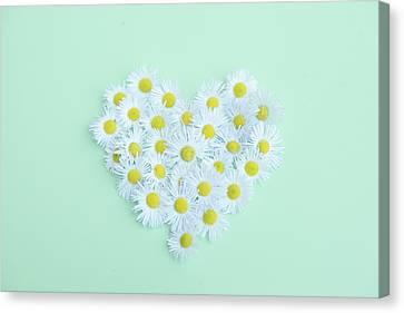 Little Daisy Canvas Print by Poppy Thomas-Hill