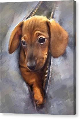 Miniature Dachshund Canvas Print