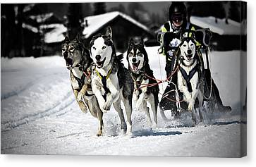 On The Move Canvas Print - Mushing by Daniel Wildi Photography