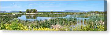 National Wildlife Preserve Marshes In Klamath Falls Oregon. Canvas Print by Gino Rigucci