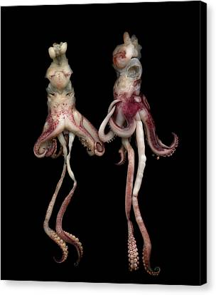 Octopus Canvas Print by Photograph by Magda Indigo