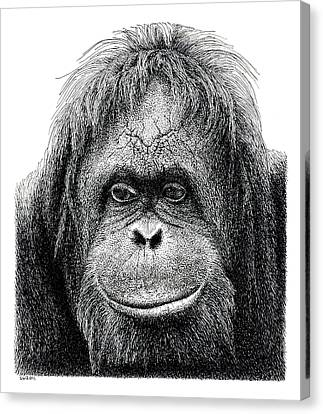 Orangutan Canvas Print by Scott Woyak