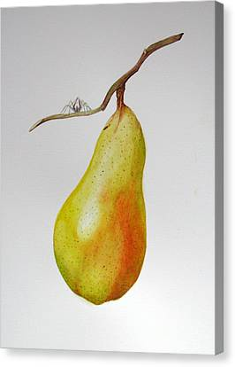 Canvas Print featuring the painting Pear With Spider by Margit Sampogna