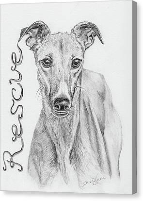 Petunia Canvas Print by Teresa Vecere