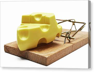 Piece Of Cheese In Mouse Trap Canvas Print by Sami Sarkis