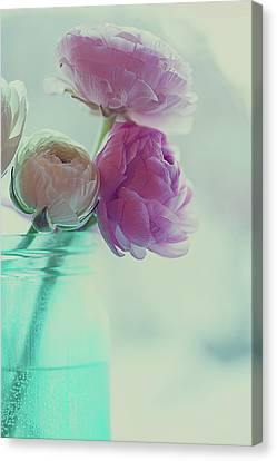 Pink And White Ranunculus Flowers In Vase Canvas Print by Isabelle Lafrance Photography