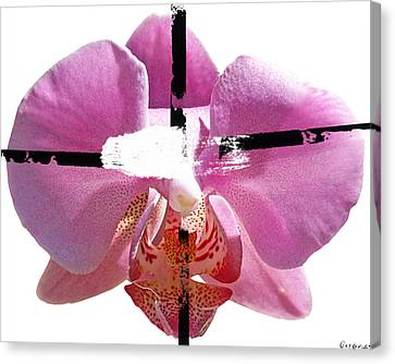 Pink Cowboy Hat Crucio Canvas Print by Geronimo