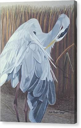 Preening Canvas Print by Anita Putman