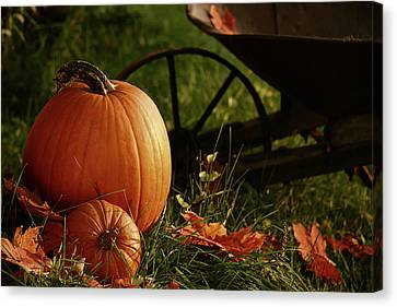 Pumpkins In The Grass Canvas Print by Sandra Cunningham