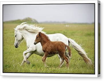 Running Horses.... Canvas Print
