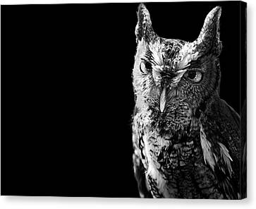 Screech Owl Canvas Print by Malcolm MacGregor
