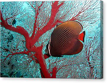 Sea Fan And Butterflyfish Canvas Print