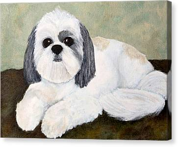 Shihtsu Canvas Print - Shih Tzu by Anne Gregorie