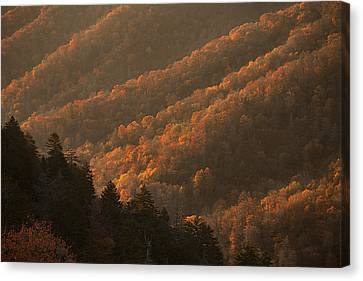 Smokies Hillside At Autumn Canvas Print by Andrew Soundarajan