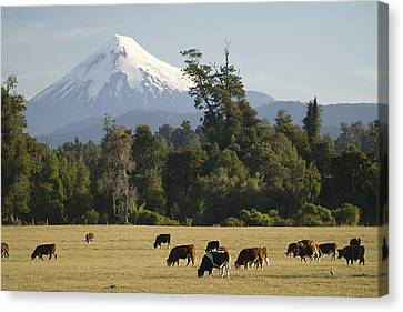 Snow-capped Osorno Volcano Canvas Print by Abraham Nowitz
