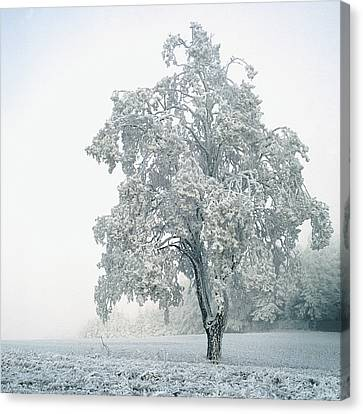 Snowy Winter Landscape Canvas Print by John Foxx