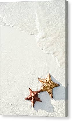 Starfish On Tropical Beach Canvas Print by Mehmed Zelkovic